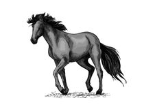 Bosquejo del caballo del semental árabe negro libre illustration