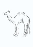 Bosquejo del camello Imagen de archivo