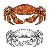 Bosquejo del cangrejo de los crustáceos del mar o crustáceo animal libre illustration