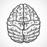 Bosquejo del cerebro humano Fotos de archivo libres de regalías
