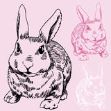 Bosquejo del conejito/del conejo libre illustration
