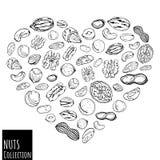 Bosquejo del corazón de las nueces ilustración del vector