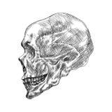 Bosquejo del cráneo del ser humano del perfil Ejemplo del vector del dibujo de la mano Fotografía de archivo libre de regalías