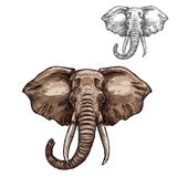 Bosquejo del elefante del animal africano del mamífero libre illustration