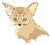 Bosquejo del gato lindo con los ojos verdes Foto de archivo