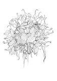 Bosquejo del girasol del dibujo de la pluma Foto de archivo libre de regalías