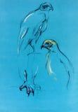 Bosquejo del halcón Imágenes de archivo libres de regalías