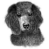 bosquejo del perro de aguas Imagen de archivo libre de regalías