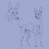 Bosquejo del perro del faraón Fotos de archivo