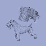 Bosquejo del perro del terrier de azul de Kerry Foto de archivo