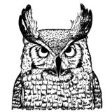 Bosquejo del vector del búho en el fondo blanco Ejemplo realista del pájaro libre illustration