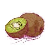 Bosquejo del vector de un kiwi stock de ilustración