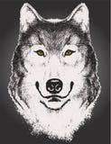 Bosquejo del vector de una cara del lobo Imagen de archivo
