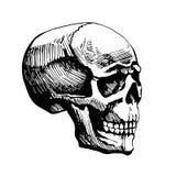 Bosquejo del vector del hombre del cráneo Imágenes de archivo libres de regalías