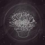 Bosquejo del vector, ramo del tulipán en la pizarra Imágenes de archivo libres de regalías