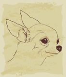 Bosquejo del vintage del perro lindo de la chihuahua Fotografía de archivo libre de regalías