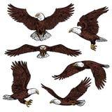 Bosquejo depredador del vector de los pájaros del águila calva ilustración del vector