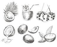 Bosquejo dibujado mano del coco del vector con la hoja de palma Fotografía de archivo libre de regalías