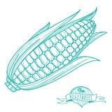 Bosquejo dibujado mano del esquema de la mazorca de maíz (estilo plano, línea fina) Imagen de archivo