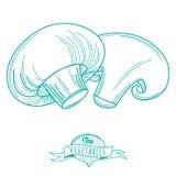 Bosquejo dibujado mano del esquema de las setas (estilo plano, línea fina) Fotografía de archivo libre de regalías