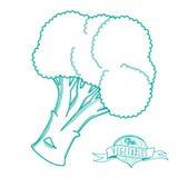 Bosquejo dibujado mano del esquema del bróculi (estilo plano, línea fina) Imagen de archivo libre de regalías