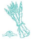 Bosquejo dibujado mano del esquema del espárrago (estilo plano, línea fina) Imagenes de archivo