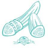 Bosquejo dibujado mano del esquema del pepino (estilo plano, línea fina) Imagen de archivo libre de regalías