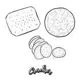 Bosquejo dibujado mano del pan de la galleta libre illustration