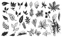 Bosquejo exhausto de la mano del vector del ejemplo de las hojas en el fondo blanco stock de ilustración