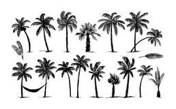 Bosquejo exhausto de la mano del vector del ejemplo del logotipo de la palma en el fondo blanco stock de ilustración
