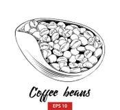 Bosquejo exhausto de la mano de los granos de café en negro aislados en el fondo blanco Dibujo detallado del estilo de la aguafue ilustración del vector