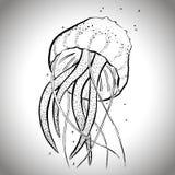 Bosquejo gráfico de las medusas; ejemplo EPS10 del vector foto de archivo libre de regalías