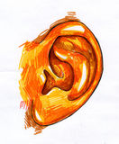 Bosquejo humano del oído Foto de archivo