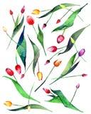 Bosquejo inconsútil dispuesto polvoriento amarillo púrpura rosado rojo de la mano de la acuarela del modelo de los tulipanes herm stock de ilustración