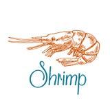 Bosquejo marino del camarón o de la gamba en estilo del grabado Fotografía de archivo libre de regalías