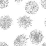Bosquejo monocromático hermoso, papel pintado inconsútil de la flor blanco y negro de la dalia Fotografía de archivo libre de regalías