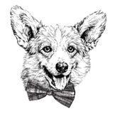 Bosquejo retro del estilo del inconformista del vintage del perro divertido del corgi de Pembroke Welsh stock de ilustración