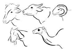 Bosquejo simple, animal cinco que se permite slaughted en adha del idul Imagen de archivo libre de regalías