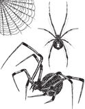 Bosquejos de la araña de la viuda negra Imagen de archivo libre de regalías