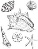Bosquejos de la concha marina Imagenes de archivo