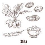 Bosquejos de las nueces y de la mantequilla del mandingo en cuenco o taza stock de ilustración