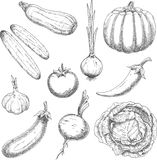 Bosquejos de las verduras de la granja para el diseño de la agricultura Fotografía de archivo libre de regalías