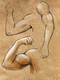 Bosquejos de manos musculares Imagen de archivo libre de regalías