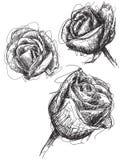 Bosquejos de Rose Foto de archivo libre de regalías