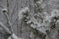 Bosquejos del invierno Imagen de archivo libre de regalías