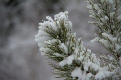 Bosquejos del invierno Fotos de archivo