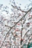 Bosquejos del invierno Fotografía de archivo
