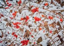 Bosquejos del invierno Foto de archivo
