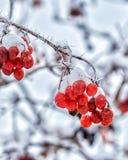 Bosquejos del invierno Imagen de archivo