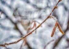 Bosquejos del invierno Foto de archivo libre de regalías